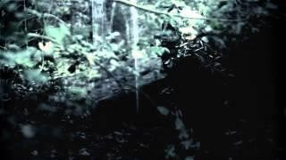 Shores Of Null - Quiescent [Official Video]