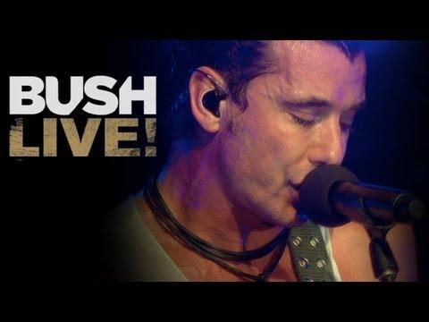 BUSH NEW BLU-RAY & DVD!